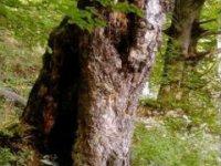 stare stromy