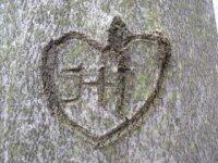 Strom s príbehom,  foto: Klaudia Medalová