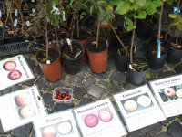 tradičné, regionálne sorty ovocných stromov a kríkov