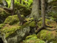 V lese,  foto: Mgr. Miroslav Mesaros