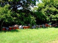 včelstvá - ekofarma podskalie
