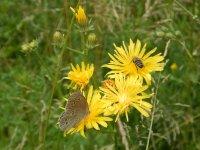 včielka s motýlikom