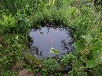 vodný prvok v záhrade