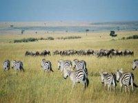 za zebrami do kene