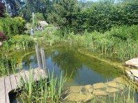 záhradné kúpacie jazierko