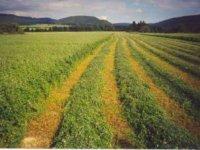 zelené hnojenie - agrokarpaty...