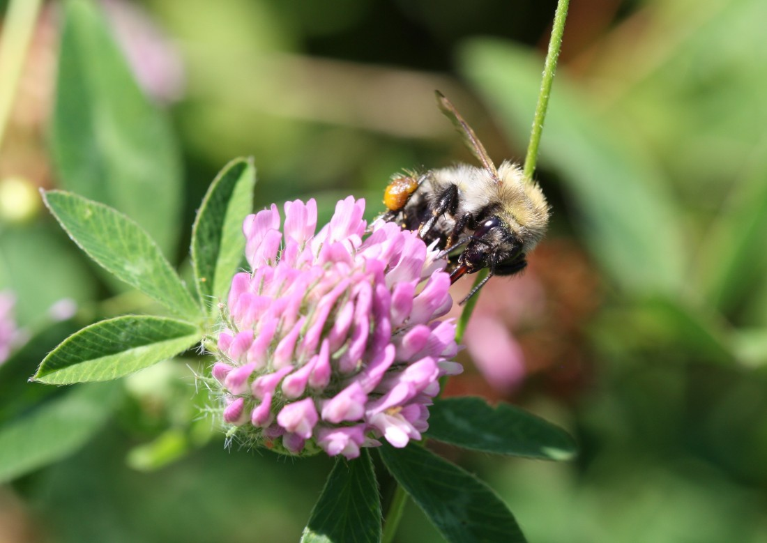 kam včela nedočiahne