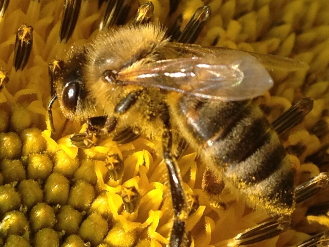 slnečnice aj včielky mi robia radosť