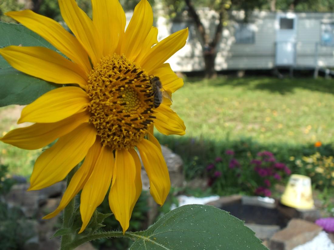 včely okolo nás