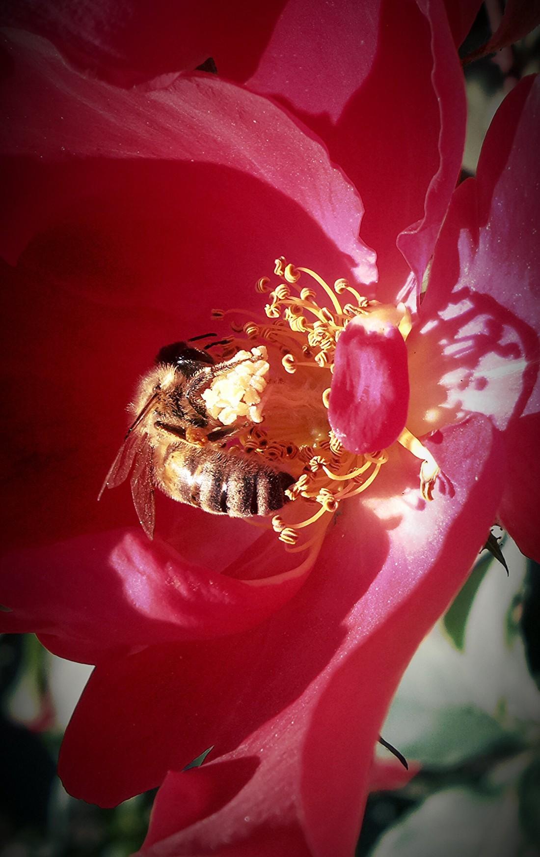 Život včely