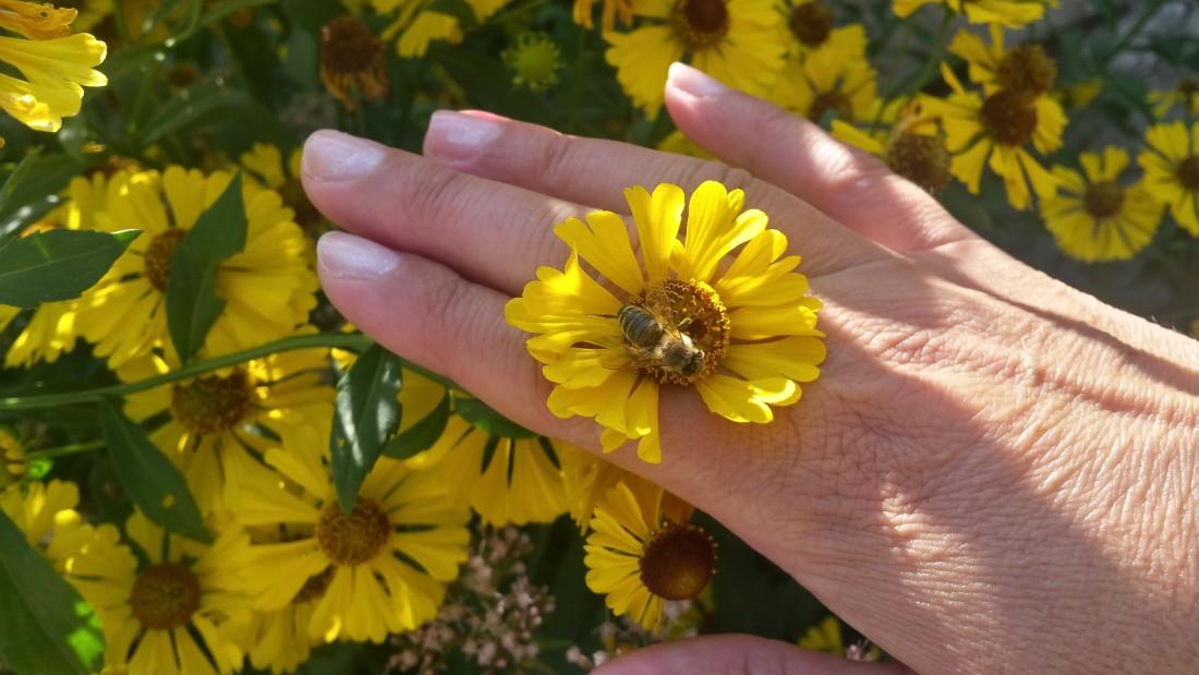 Živý drahokam na prstenníku
