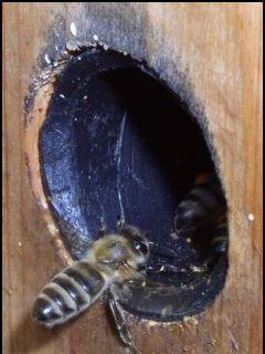Bio včela
