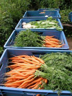BioBox - zelenina z Lučního údolí Velehrad, pripravená do debničiek pre odberateľov v Brne