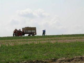 Vyšší podiel ručnej práce je jedným z faktorov oprávnene vyššej ceny biopotravín/ foto: Tatiana Tóthová