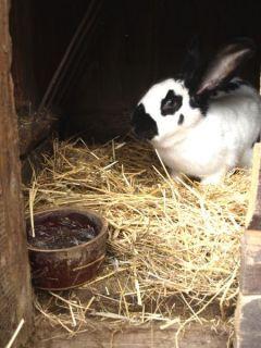 Dospelé králiky sú chované oddelene
