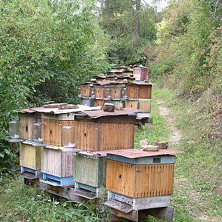 farma Brezovica - úle II