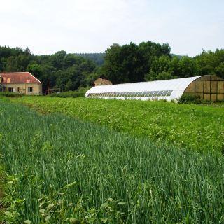 farma Lúčne údolie - zelenina