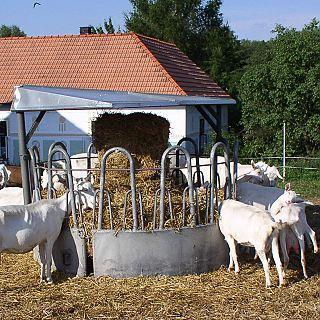 farma Špatný - kozy