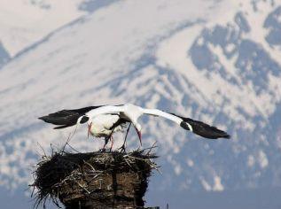 Hniezdo utkané z konárov