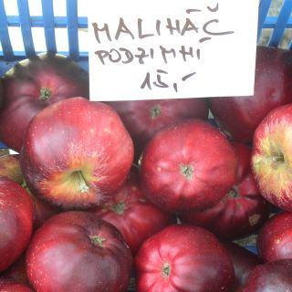 Jablčné slávnosti Hostětín - Malináč
