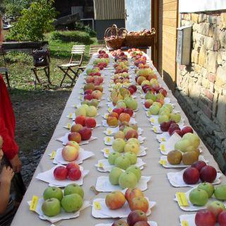 Jablčné slávnosti Hostětín - staré sorty