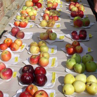 Jablčné slávnosti Hostětín - výstava