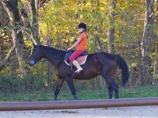 Kôň v jazdiarni