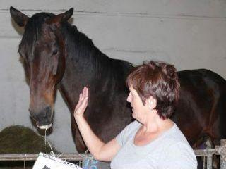 Kôň v stajni s pani Bušovskou