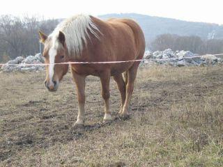 Jeden z koníkov, sad Lívia