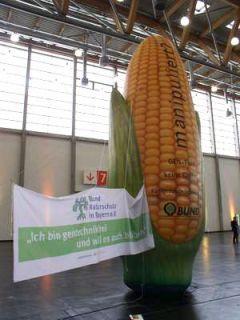Kukurica bez GMO