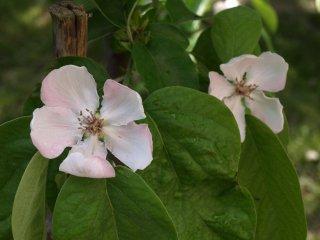 Kvety dule