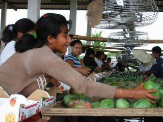 Fair Trade mango na predaj v Ekvádore