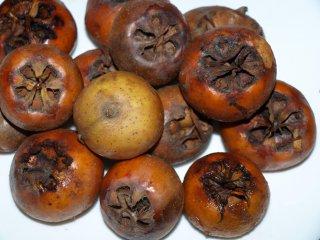 Mišpuľa - dozreté plody.