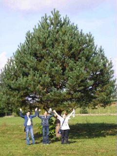 Naj strom v Prešove