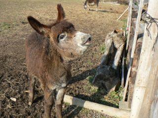 Najmladšia obyvateľka farmy – usmievajúca sa Semi