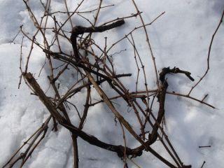 Odrezky z viniča sa ešte dajú využiť ako úkryty pre živočíchy