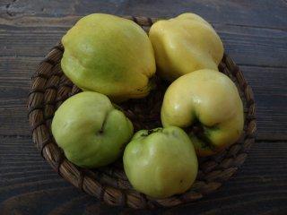 Ovocie dula
