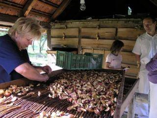 Sušenie jabĺk v tradičnej drevenej sušiarni