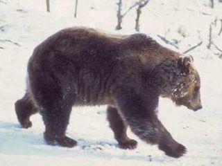 Vystava - medveď