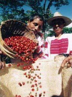 Spravodlivý obchod s kávou