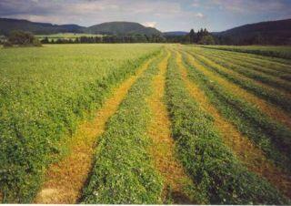 Zelené hnojenie - Agrokarpaty Plavnica