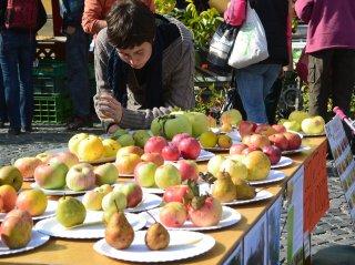 Kurz: Praktická starostlivosť o ovocné dreviny, foto: Kurz: Praktická starostlivosť o ovocné dreviny