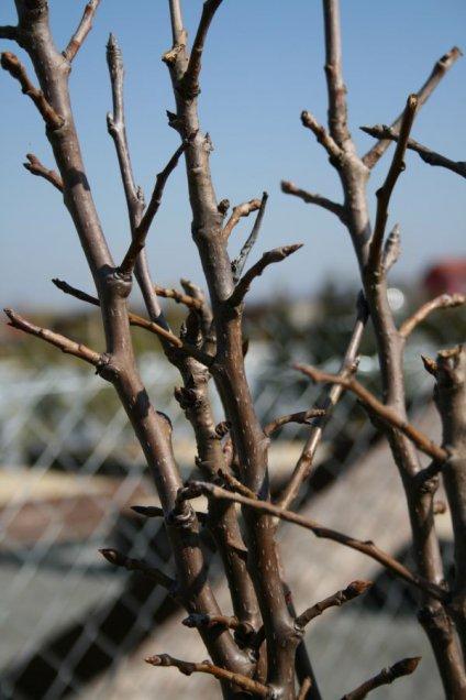 Rez, štepenie a výsadba ovocných stromov - ovocinársky kurz